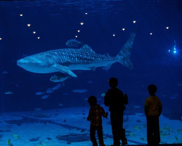 WaleShark Georgia Aquarium Ballroom